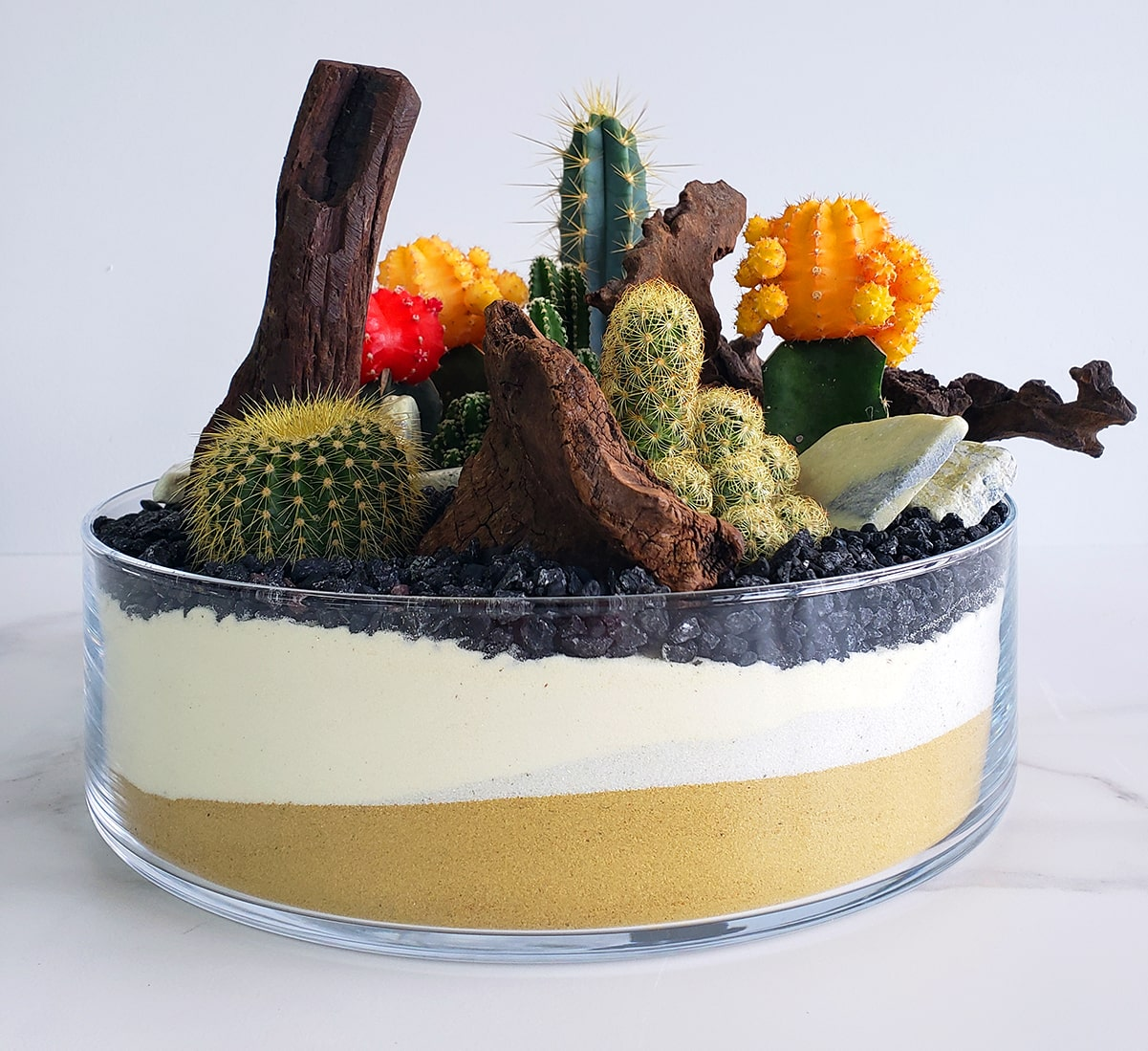 Coupe de cactus 03