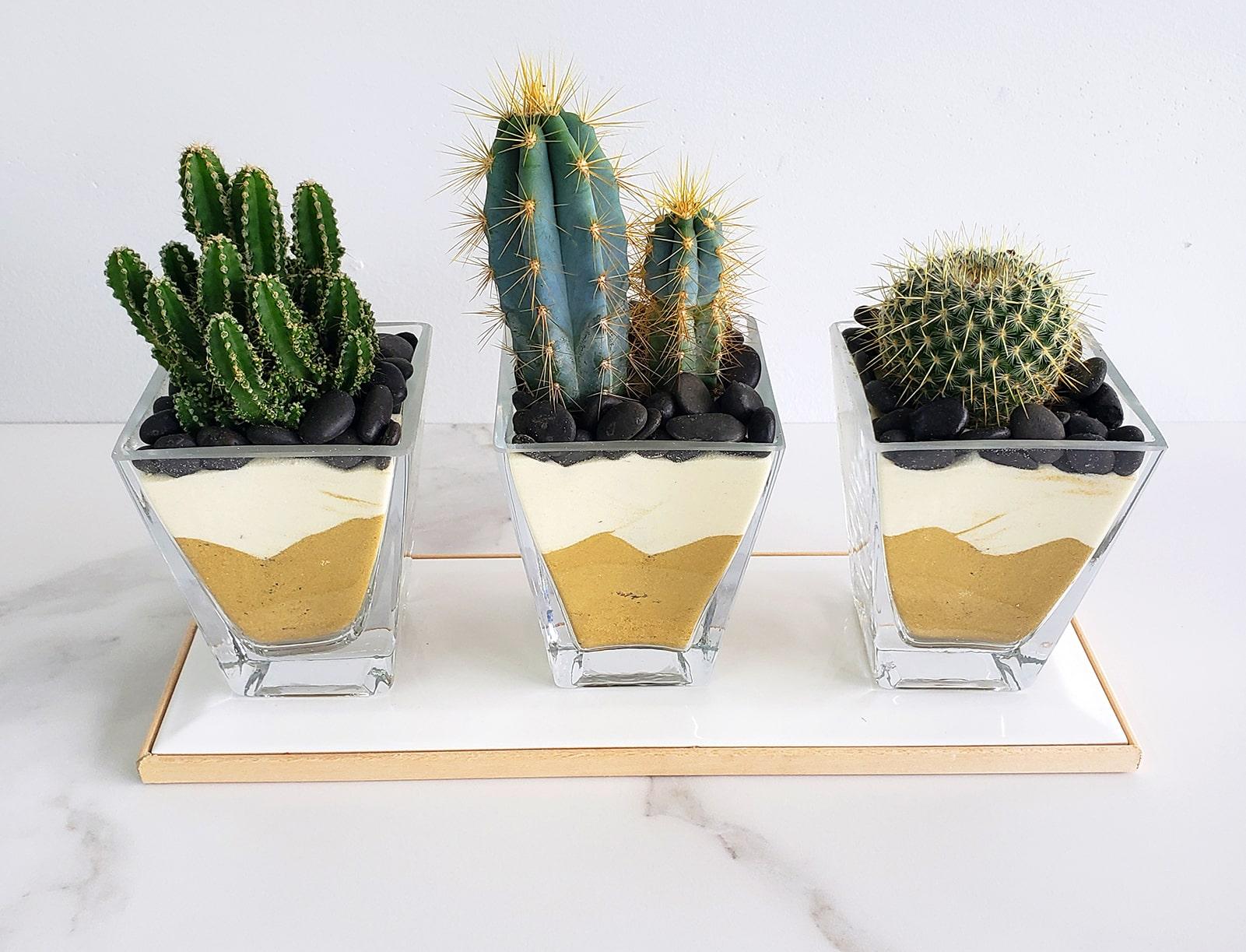 Trio de cactus dans du sable