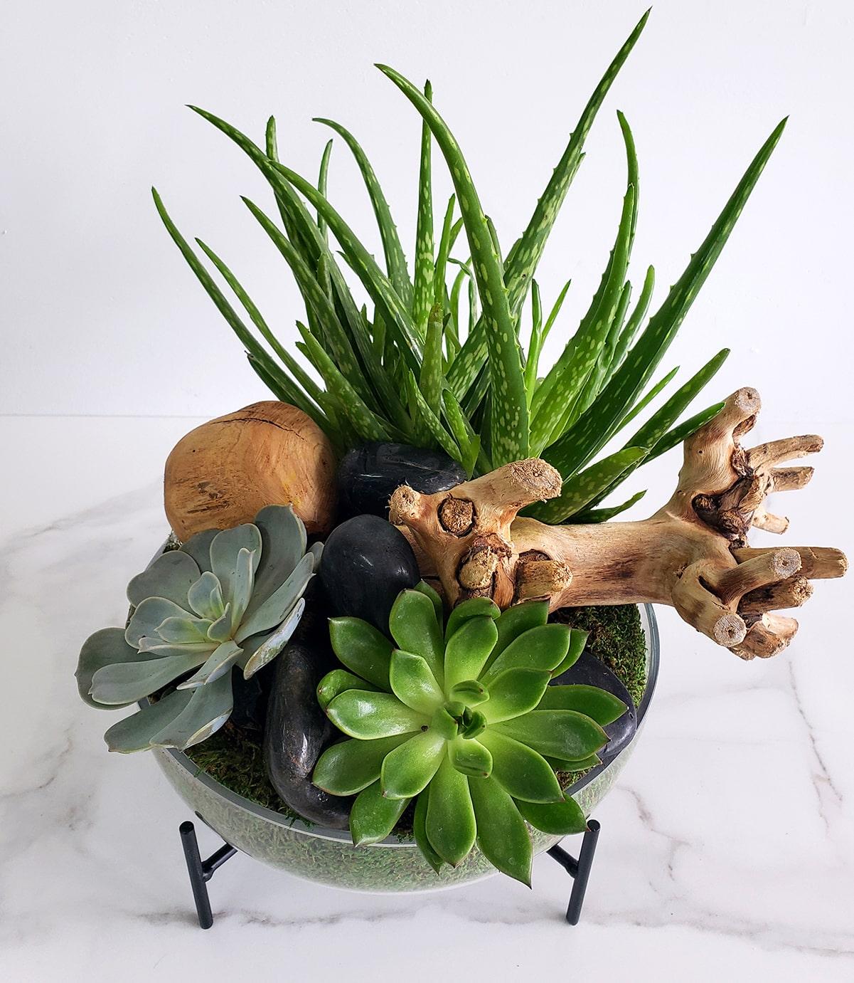 Coupe de plantes grasses et bois exotique