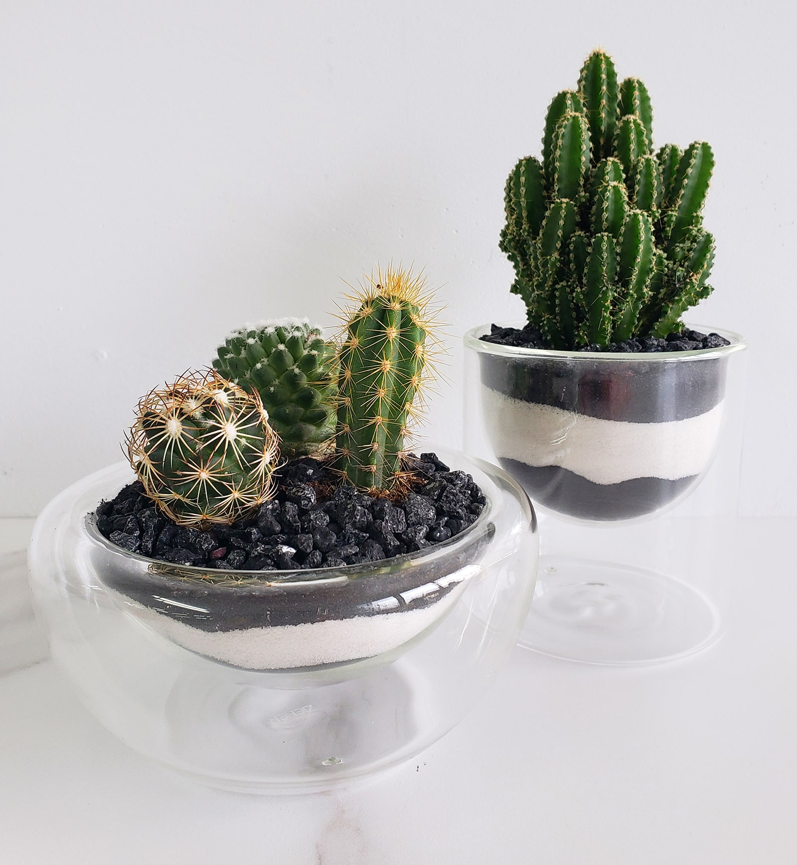 Duo de cactus