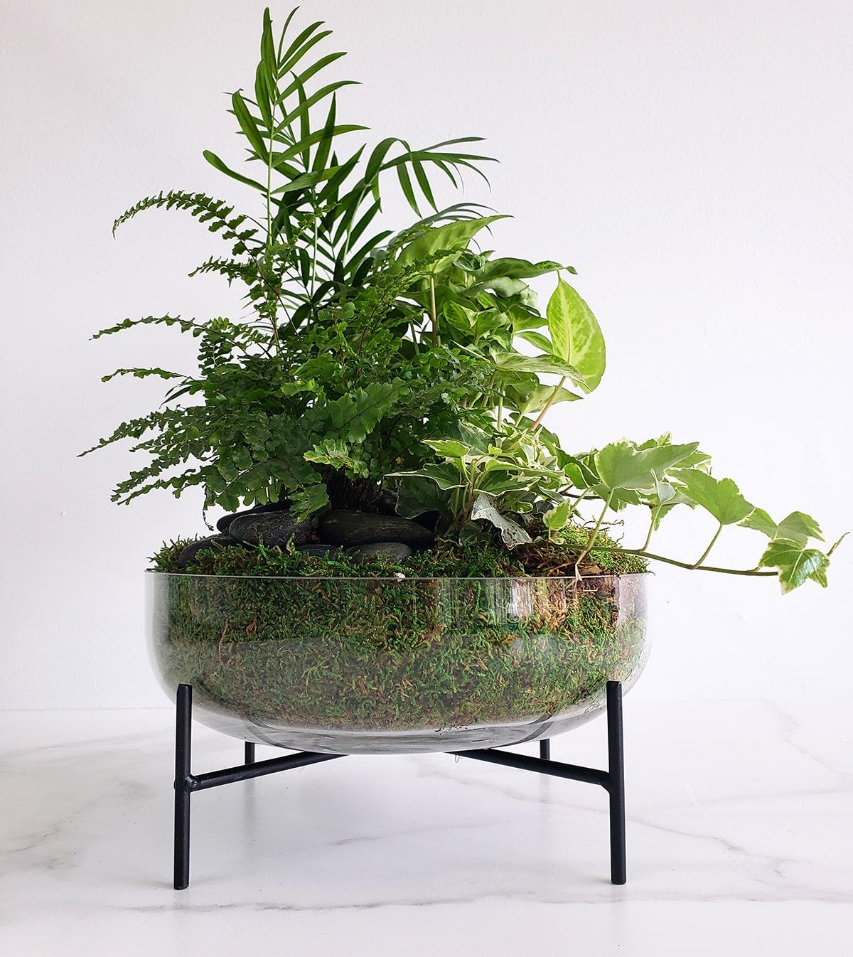 Coupe de plantes variées 01