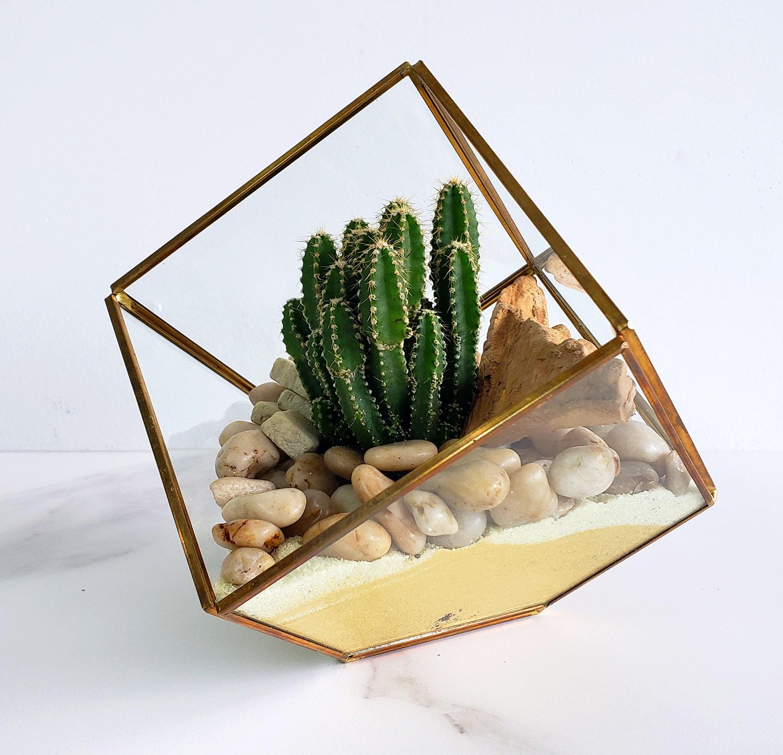 Vase à facette et son cactus