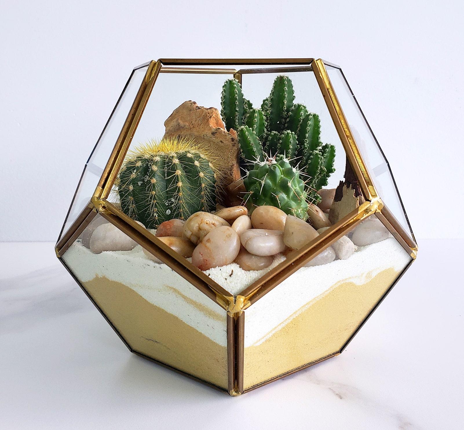 Vase octogonal et ses cactus