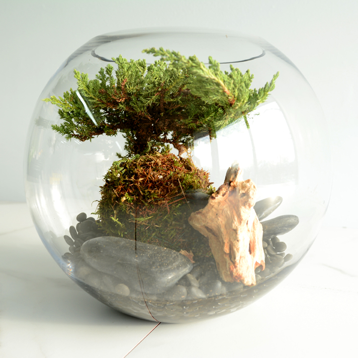 Terrarium de bonsai