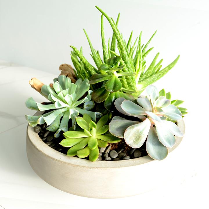 Jardin de plantes grasses 02