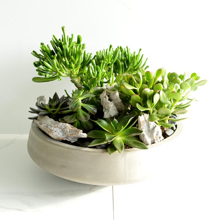 Jardin de plantes grasses 03