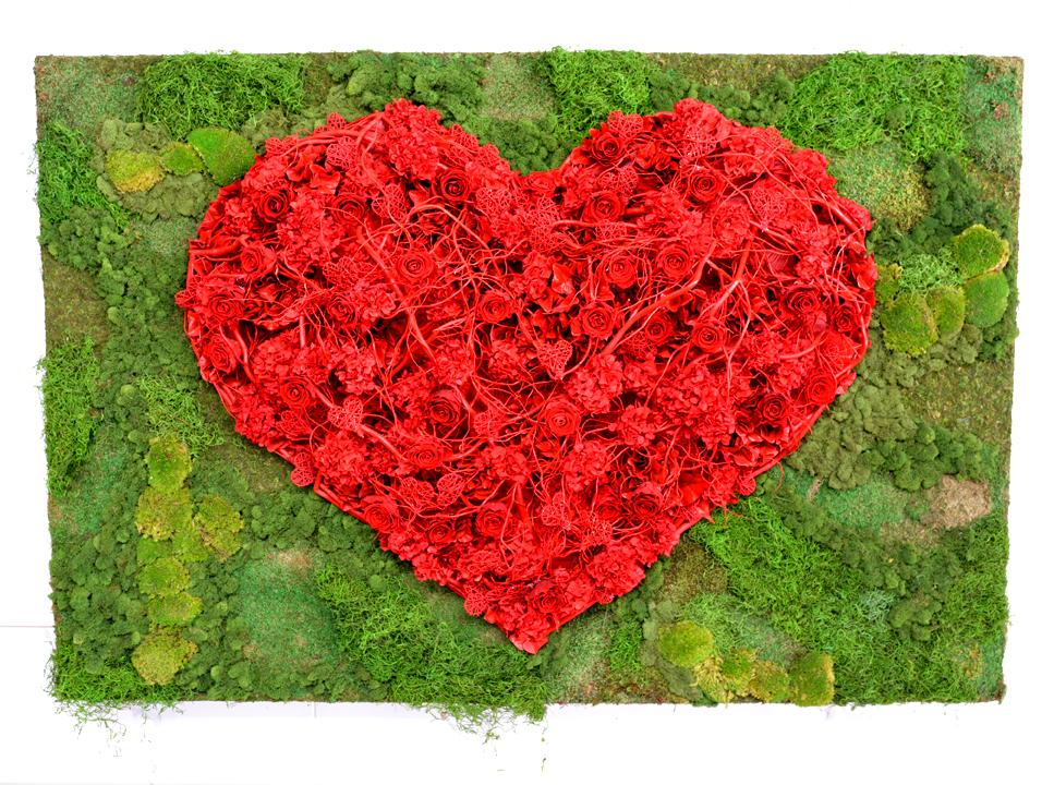 Cadre végétal de fleurs séchées rouges