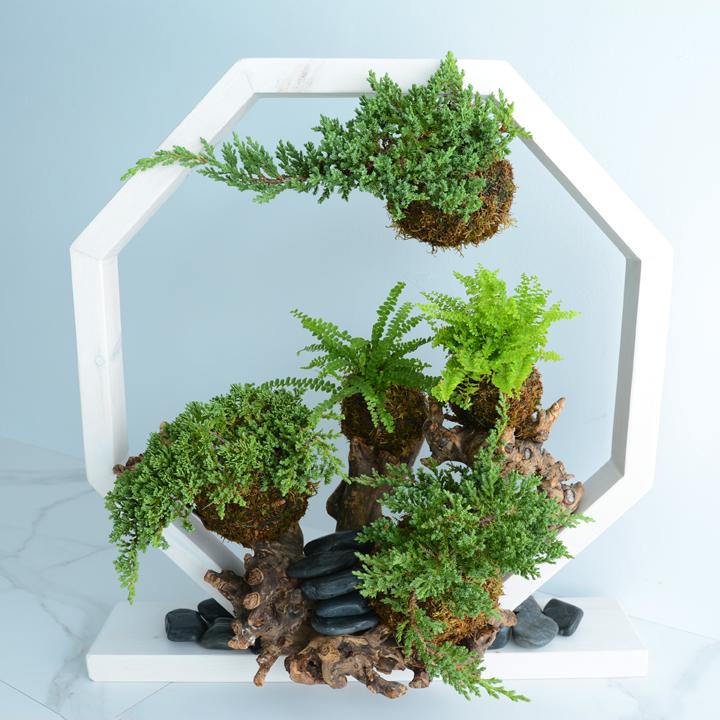 Octogone de plantes
